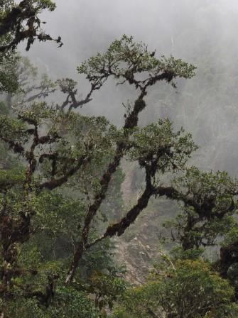 This image/crop is useful for vertical format. More detail of trees and epiphytes, but less landscape content. Esta imagen / recorte es útil para el formato vertical. Más detalles de árboles y epífitas, pero menos contenido paisajístico.