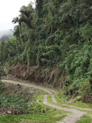 The subject here is the road cutting through the Yungas forest and the damage to the vegetation on the side of the road. El tema aquí es el camino que atraviesa el bosque de Yungas y el daño a la vegetación en el lado de la carretera..