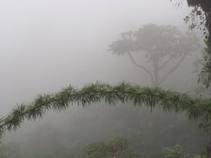 bamboo branch and fog - with the tree in the background providing an idea of the fog density...........rama de bambú y niebla - con el árbol en el fondo que proporciona una idea de la densidad de la niebla.