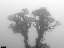 this isn't black/white - it is grayscale, in the fog.