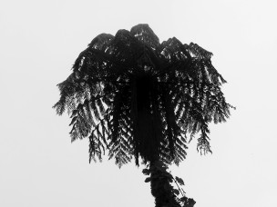 another tree fern - is this better of worse than the previous image?