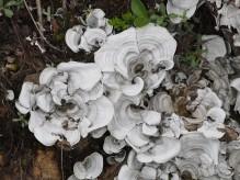 """a """"clean"""" lichen - without distractions and the lighting is uniform. But the subject seems """"bland""""........un liquen """"limpio"""" - sin distracciones y la iluminación es uniforme. Pero el tema parece poco interesante. - not very interesting."""