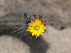 closer view of flower