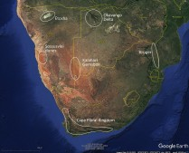 Google Earth view of same area as previous slide. Here some of the main natural attractions are indicated. These include Kruger National Park, the Okavango Delta, Etosha National Park (large salt flat andsurrounding landscapes), Sossusvlei dune area (actually part of a very large dune field), the Kalahari Gemsbok National Park (Part of a larger transfrontier park of the Kalahari Desert) and the area known as the Cape Floral Kingdom - a unique botanical zone at the southern tip of South Africa. This has a very diverse flora due to the topographic relief (that leads to climatic variations as well) as well as geological diversity.