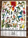 Example of a poster about select Ecuadorean Hummingbirds. There are a number of these posters. A great aspect of the poster is its identification of prominent flowers that might be seen.