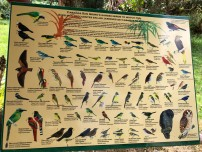 A poster of Cabañas San Isidro's Garden most frequent birds. Obviously it doesn't show all the birds found there, but the most frequently seen.