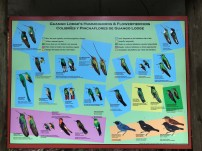 A poster at Guango Lodge showing Hummingbirds and Flowerpiercers found at the lodge.