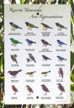 Representative birds at the Yanacocha Reserve. This doesn't show any of the hummingbirds - that is a separate poster.