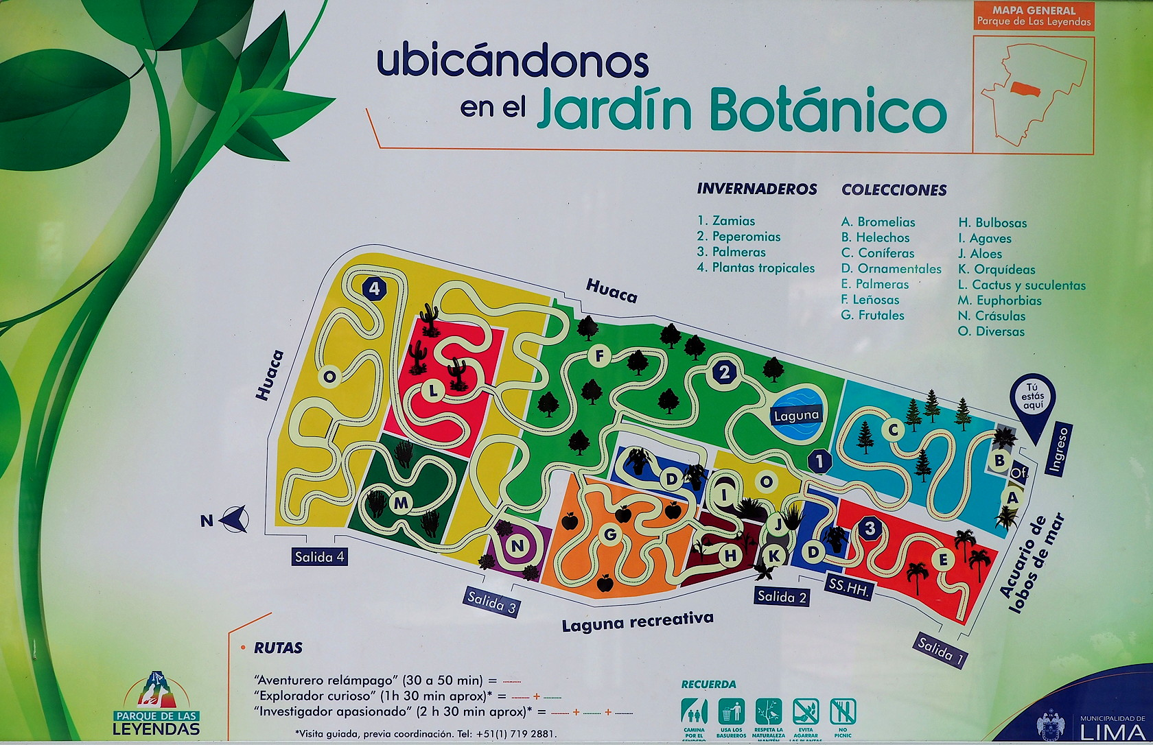 Botanic Garden map showing the different parts of the garden.  Plants are grouped roughly by the type of plant - not specifically by botanical classification.  There is a heavy emphasis on succulent plants - for example the cacti (L), crassulas (N), Agaves and Aloes (I and J), and Euphorbias (M).  Palms (E), conifers (c) and various trees (F) and fruit trees make up most of the garden.