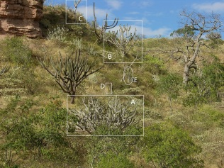 2006 image letters identify the same plants as in the 2019 image