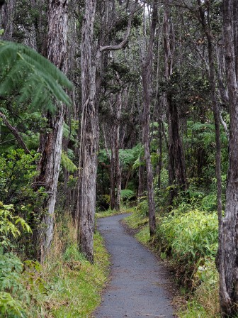 A trail with Ohia trunks in Hawaii Volcanoes National Park