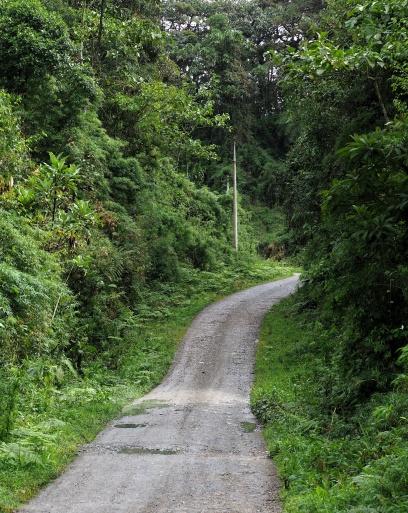 """Ideal"" birding road near Cabañas San Isidro."