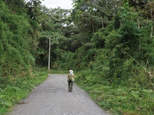 """""""Ideal"""" road for birding - done via walking. Vegetation is secondary on both sides of the road."""